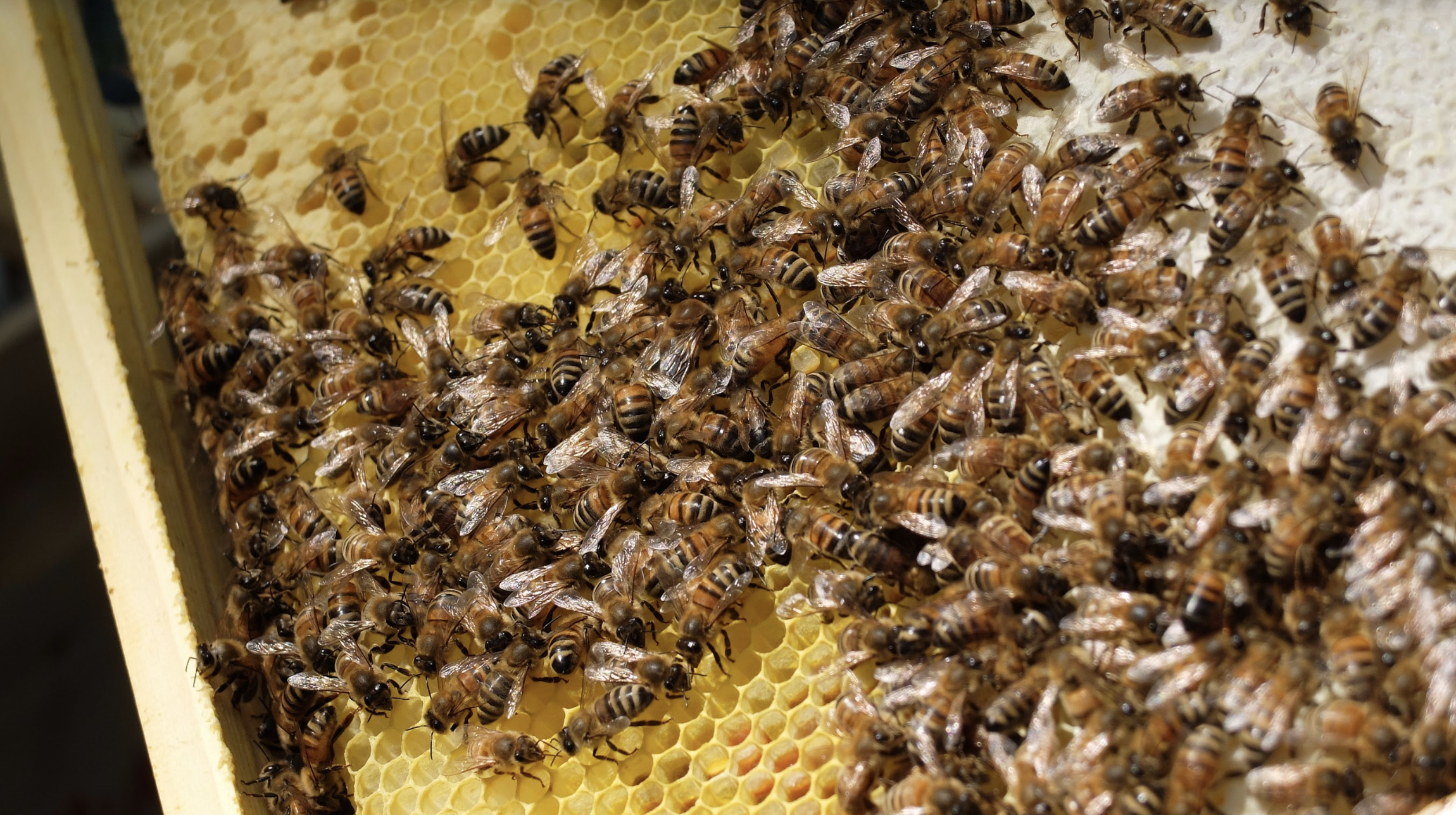 happyculteur-abeilles-5