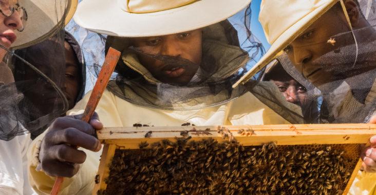 bee_my_job_progetto_apicoltura_apididattica